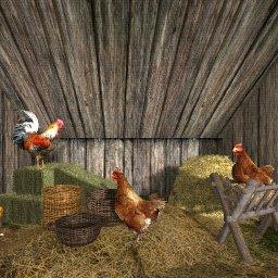 Chickens.jpeg