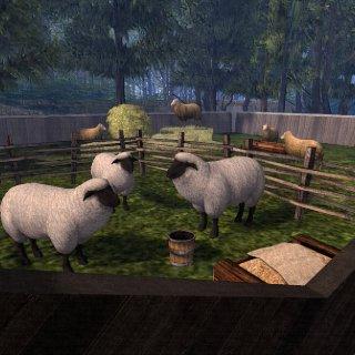 corraling the sheep.jpeg