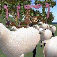 Pastoral Party for Aldo's Rez Day